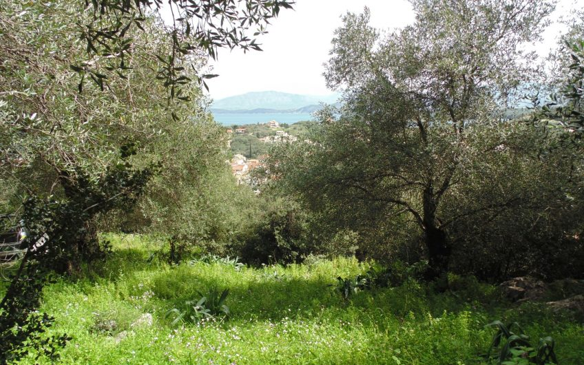 Plot immersed in olive groves