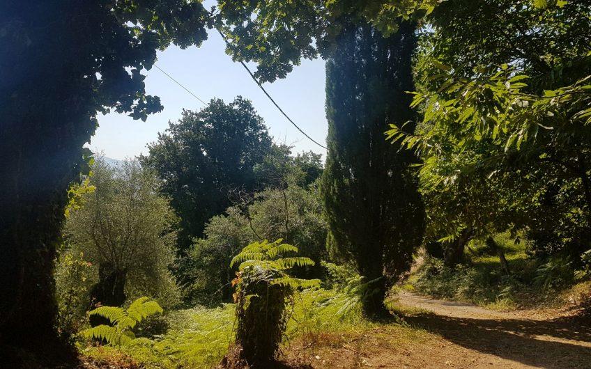 Beautiful green plot
